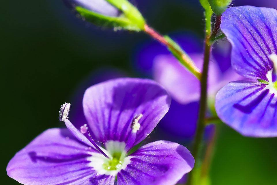 Heilpraktiker Winterbach - Blütenbild